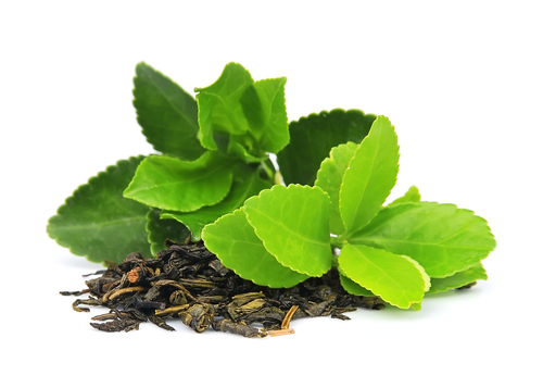 Rheumatoid Arthritis Successfully Treated with a Green Tea Compound in Animal Study