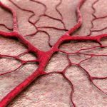 aging and blood vessels