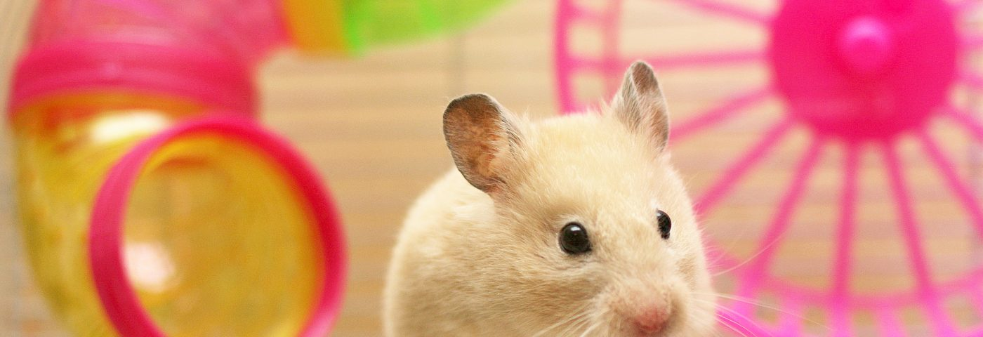 Stimulating Environment Boosted Immune System in Mice; RA applications envisioned